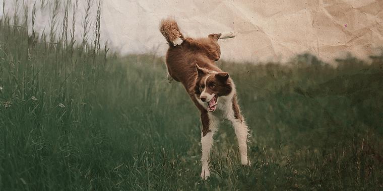 hyperaktiv-banner-dog-4441585-pixabay