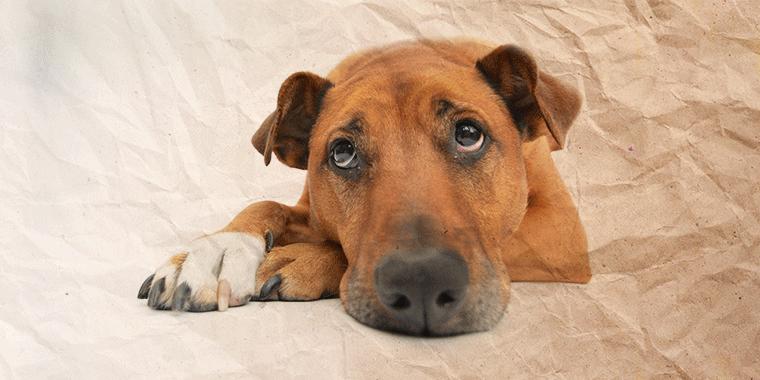 belkeit-Hund-760x380