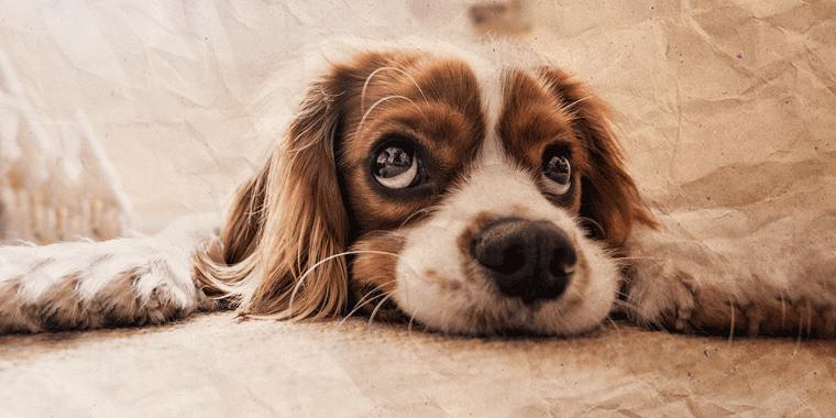 hund-stinkt-banner-dog-2-pixabay