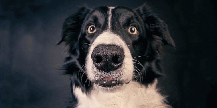 hund-stinkt-banner-dog-4441585-pixabay