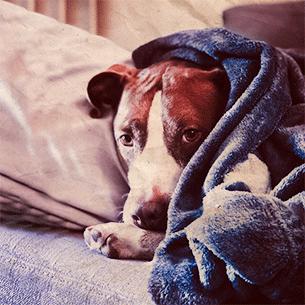 belkeit-Hund-1zu1